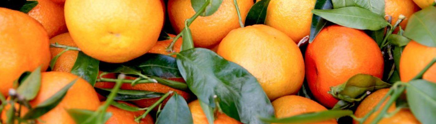La ruta de la naranja en castellon paquete 5 dias